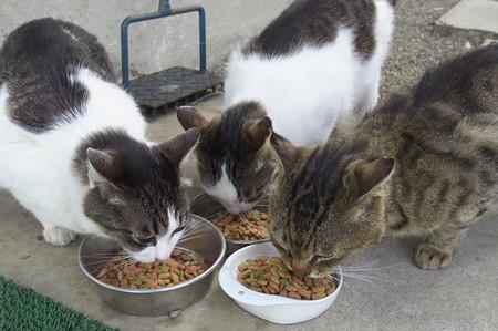 最近の朝の猫さんたち