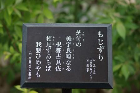 捩花(ネジバナ)