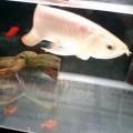 熱帯魚・アクアリウムマニア
