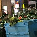 Photos: 瑞江の夜ーパチンコ店の前で