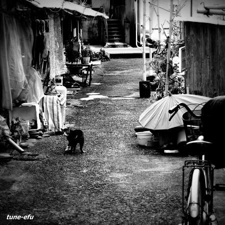 街猫413
