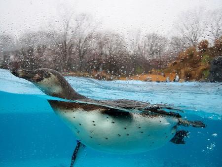 20140330 ペンヒル 雨のペンギンヒルズ08