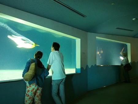 20140502 アドベン 海獣館01