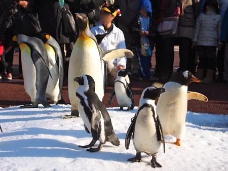 20131207 アドベン ペンギンパレード12