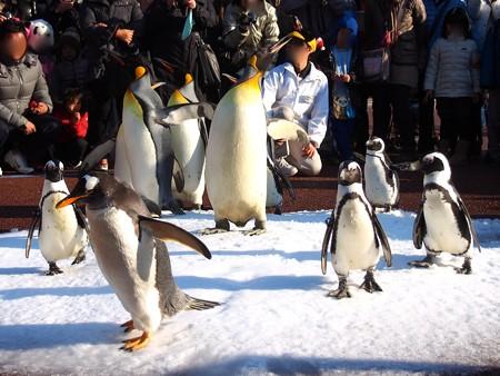 20131207 アドベン ペンギンパレード10