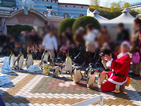 20131207 アドベン ペンギンパレード06