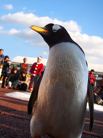 20131207 アドベン ペンギンパレード16