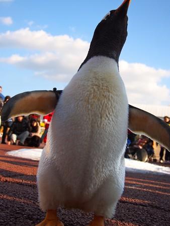 20131207 アドベン ペンギンパレード15