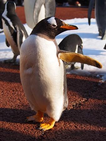 20131207 アドベン ペンギンパレード21