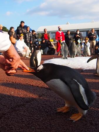 20131207 アドベン ペンギンパレード30
