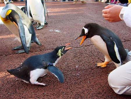 20131207 アドベン ペンギンパレード26