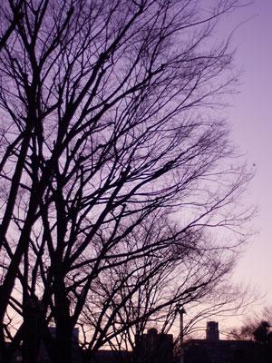 写真: 新宿の夕暮れ