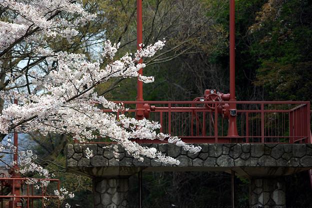 蹴上・・・インクラインの桜 その…33