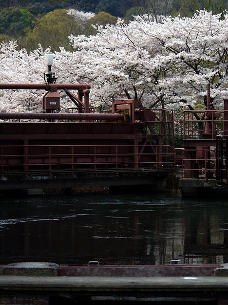 蹴上・・・インクラインの桜 その…36