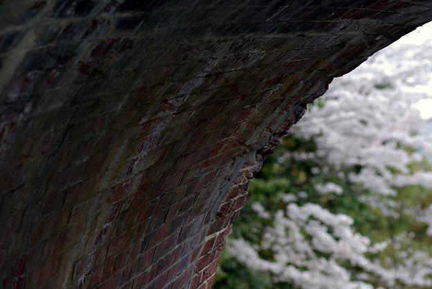 蹴上・・・インクラインの桜 その…37