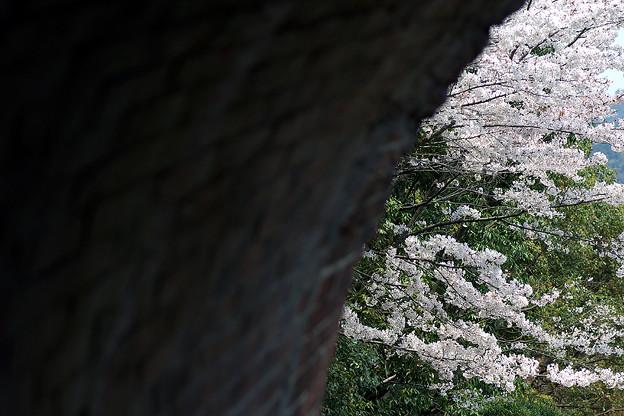 蹴上・・・インクラインの桜 その…39