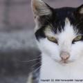 Photos: 公衆便所に住む猫