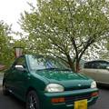 緑の車と緑の桜