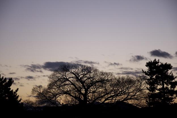 Photos: 木は見ている