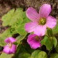 写真: 道端で咲く…(2)