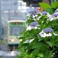 Photos: 雨の都電荒川線(2)