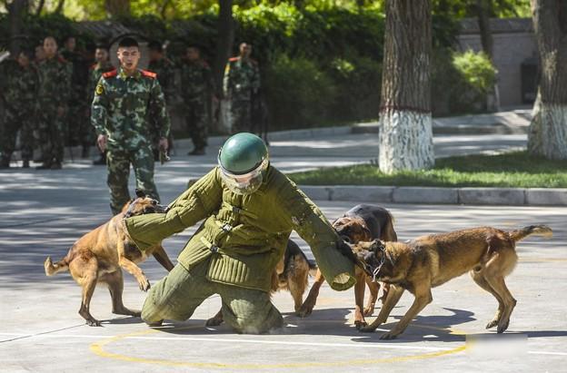 新疆の公安訓練 (4)