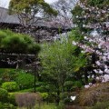 Photos: 桜庭園