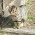 Photos: 明治村-猫