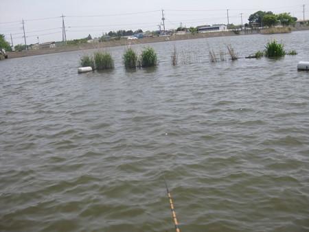 遠州池-20140514 (4)