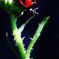 写真: てんとう虫