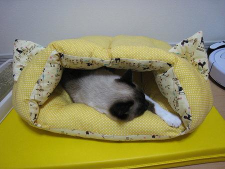猫耳ベッドの中のラテ