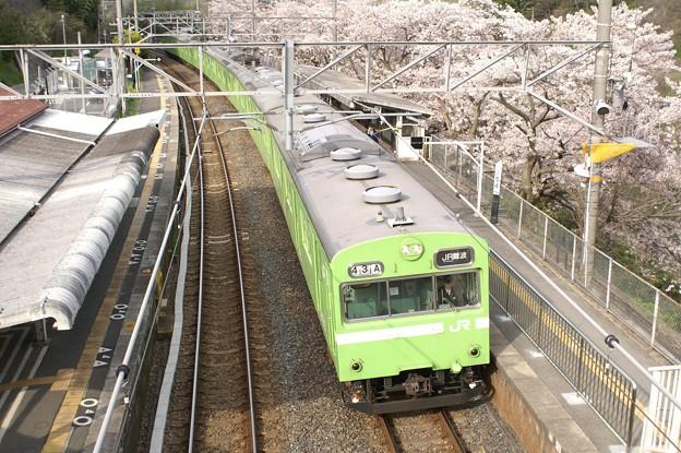 桜の駅、河内堅上。(関西本線:大阪府)