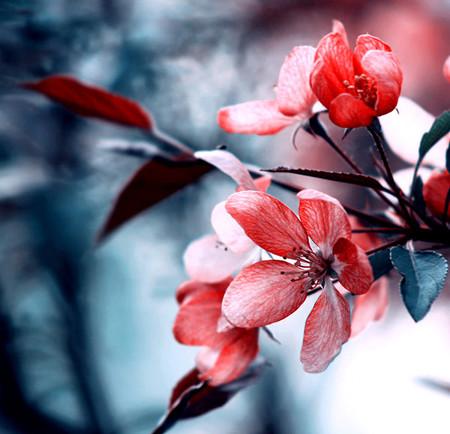 快乐五一长假之用照相机记录春天