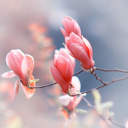 12-spring-by-kira-winter