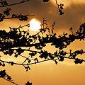 影絵~春の夕景色