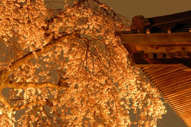 夜桜には鐘つき堂が良く似合う^^