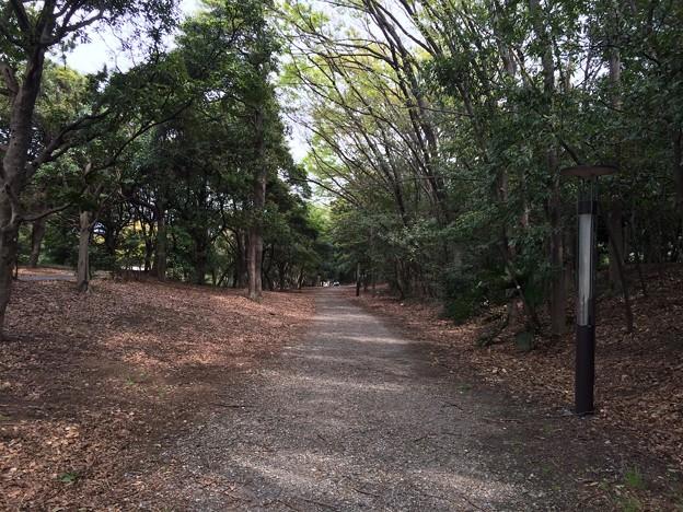 140413 辰巳の森緑道公園