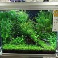 2009年度 第27回日本観賞魚フェア 水槽ディスプレイコンテスト 60cm水槽の部 優勝