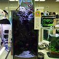 Photos: 2009年度 第27回日本観賞魚フェア 水槽ディスプレイコンテスト ミニアクアリウムの部 優勝