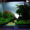 【作品】第26回日本観賞魚フェア 水槽ディスプレイコンテスト 90cm水槽部門 準優勝