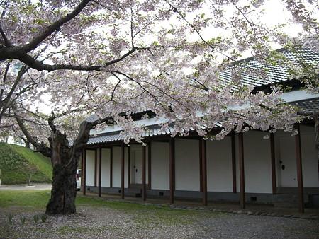 兵糧庫と桜
