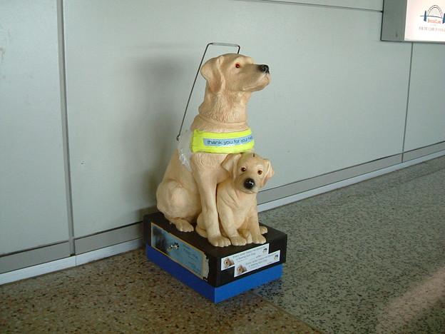 ブリスベン空港にて/ガイドドッグの募金箱