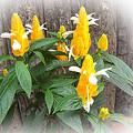 Photos: 珍しい花