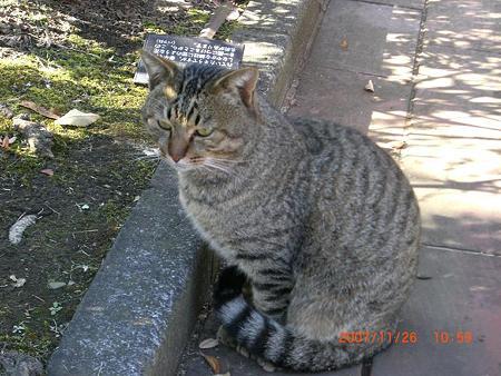 公園猫ー1