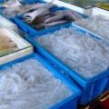 写真: 太湖の白魚