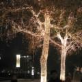 写真: ライトアップされた木々