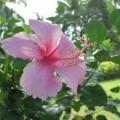 写真: 南国の花