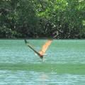 写真: ワシが獲物を獲る瞬間