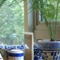 写真: 涼しさを誘う鉢植え