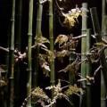 写真: 竹林もある
